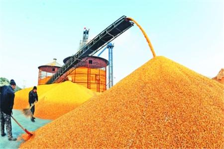 供給側結構性改革抬升玉米價格